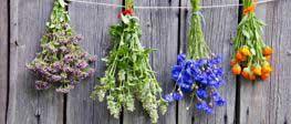 zioła - składnik karm Mills Farm - suszące się na ogrodzeniu
