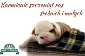 mills-farm-karmienie-szczeniakow-285x190 Puppy