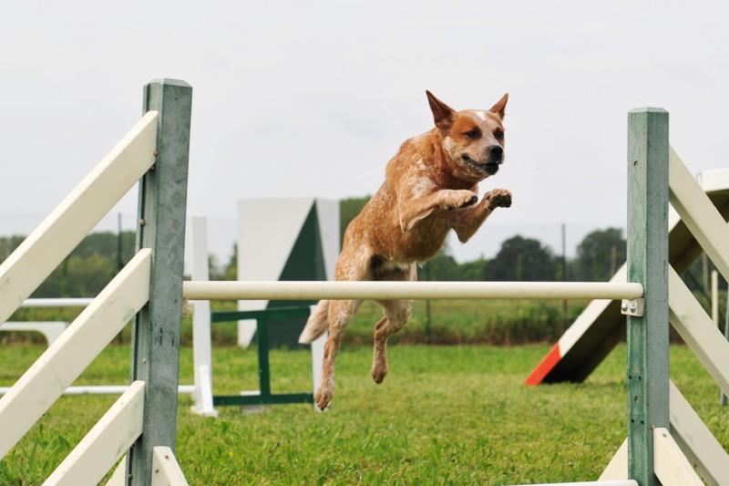 mills-farm-karma-dla-psow-aktywnych Karmienie psów o zwiększonych potrzebach energetycznych Porady żywieniowe