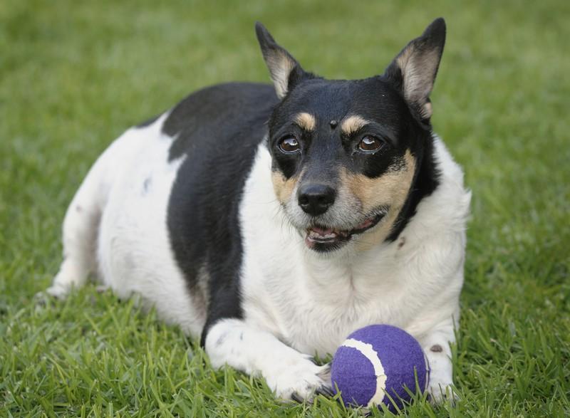 mills-farm-karma-dla-psow-otylych Karmienie psów z tendencją do otyłości Porady żywieniowe