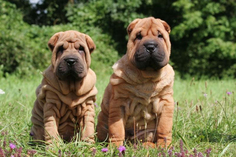 mills-farm-karma-dla-psow-sklonnych-do-alergii Karmienie psów wrażliwych lub ze skłonnością do alergii Porady żywieniowe