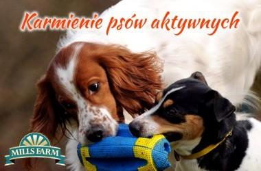 Karmienie psów o zwiększonych potrzebach energetycznych