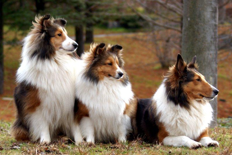 Mills Farm karmienie psów dorosłych ras średnich i małych