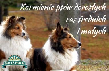 Karmienie psów dorosłych małych i średnich ras