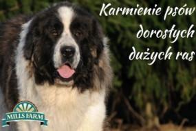 mills-farm-karmienie-psow-doroslych-duzych-ras-285x190 (M) Lamb, Peas & Potato