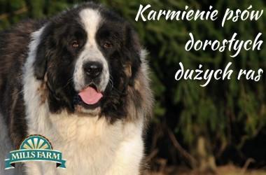 mills-farm-karmienie-psow-doroslych-duzych-ras-380x250 Start