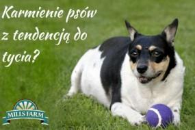Karmienie psów z tendencją do otyłości