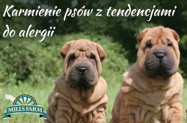 Karmienie psów wrażliwych lub ze skłonnością do alergii