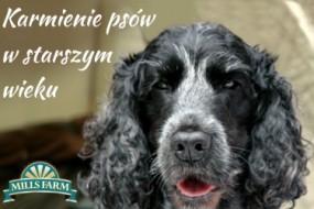 Karmienie psów w starszym wieku